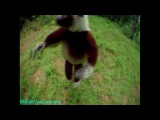 BBC «Загадочные животные (1) - Причудливые способы передвижения» (Документальный, 2002)